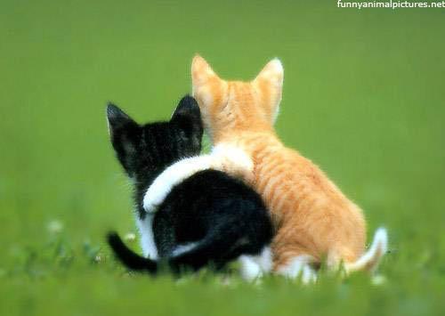 网络之上的友情